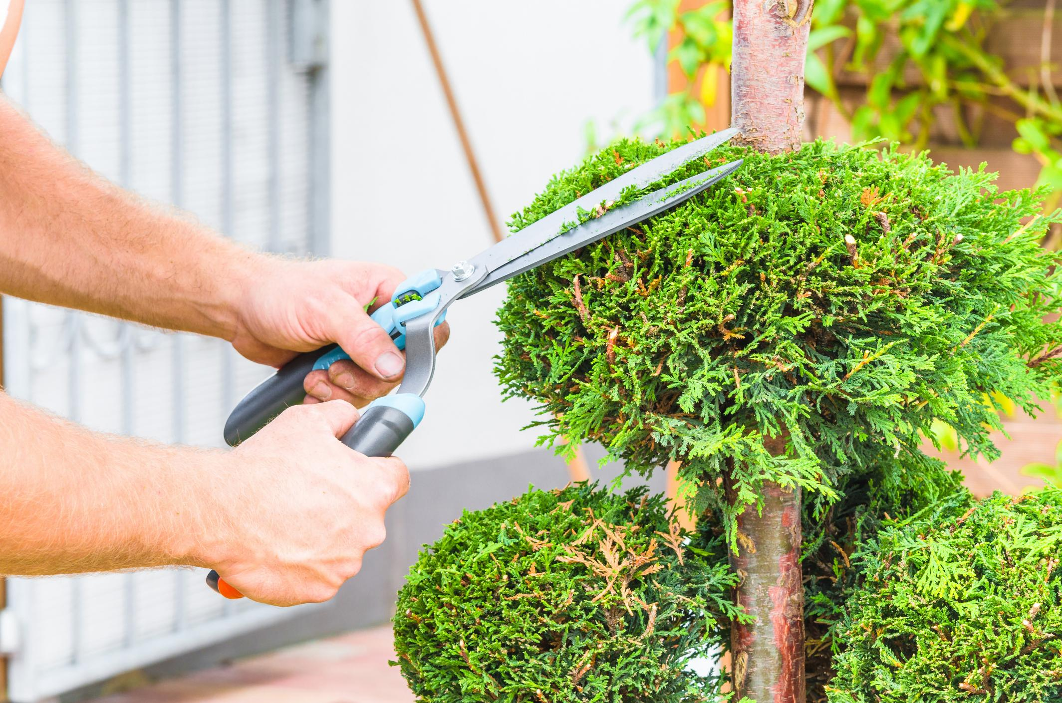 Parts that you need to consider with tree cutting
